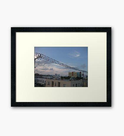 Bird Stadium Framed Print
