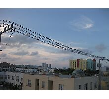 Bird Stadium Photographic Print