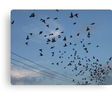 Bird Stadium Take off Canvas Print
