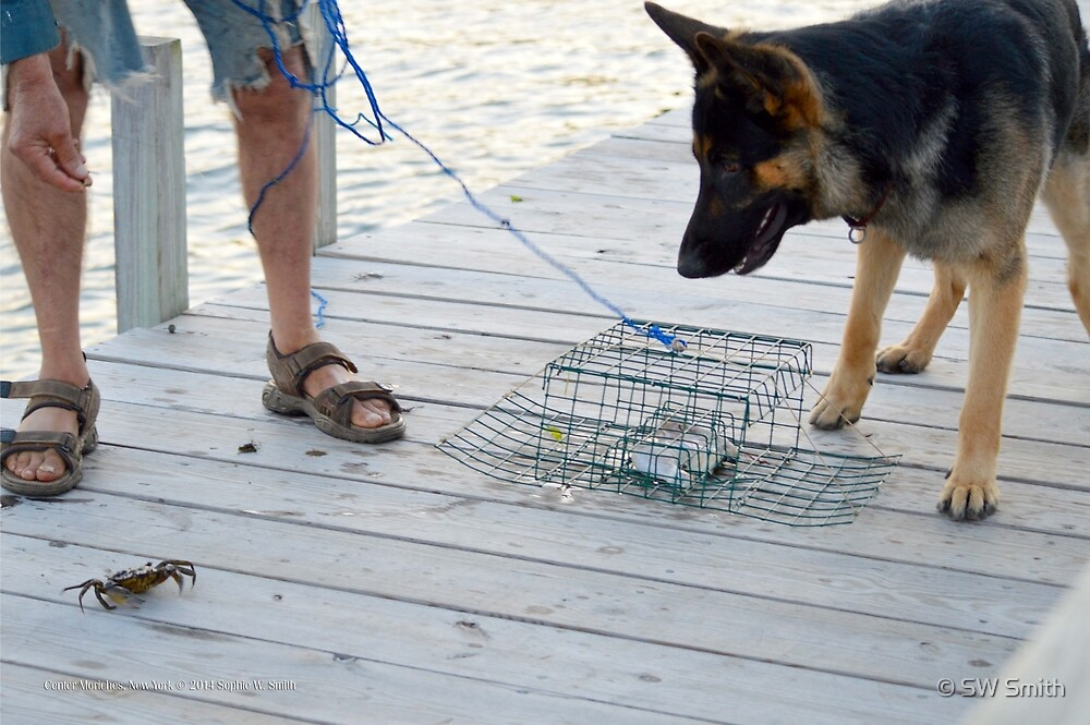 German Shepherd & Crab | Center Moriches, New York  by © Sophie W. Smith