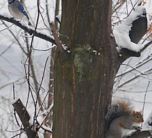 Squirrel and Blue Jay by Louise Fahy