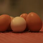 Fresh Eggs.... by sacredmoments