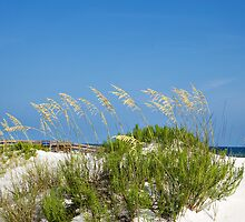 florida beaches- sand dune by nolenphotograph