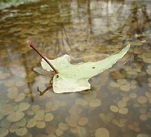 Leaf on a lake... by sacredmoments
