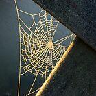 Sunkissed Web by ienemien