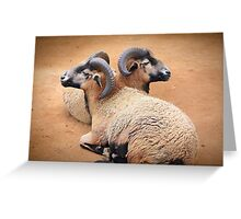 Barbados Rams Greeting Card