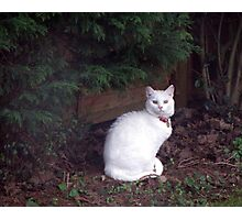 Casper in the garden Photographic Print