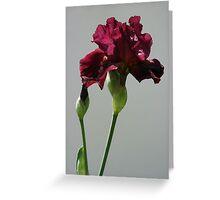 Burgandy Iris Greeting Card