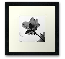 DOGWOOD BACKSIDE Framed Print