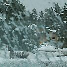 Blizzard in Flagstaff, 125 viewa, 3 comments by dragonsnare