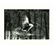 Goose on Ice ~ Mangerton, Dorset  Art Print