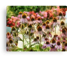 Coneflower Sunrise Canvas Print