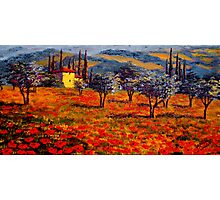 Tuscany Spring Olive Grove Vista Photographic Print