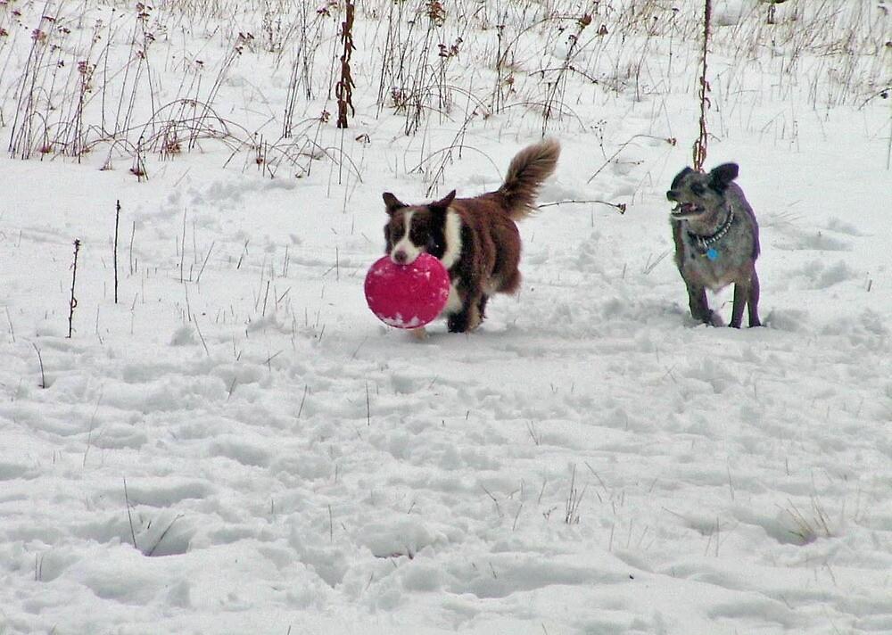Hurry up Louie says Cheyenne! by Edward Henzi