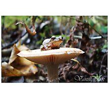 Toadstool Photographic Print