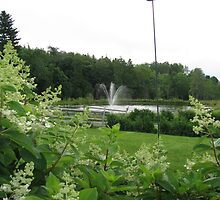 Fountain - Richards Trout Pond, Maine by TreeLadyNmaine