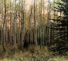 The Aspen Stand by Vickie Emms