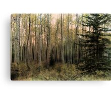 The Aspen Stand Canvas Print