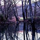 Midnight Serenade by NatureGreeting Cards ©ccwri