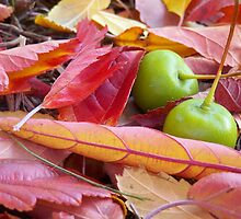autumn tumble. huddling crab-apples in leaf fall by Deb Stelling