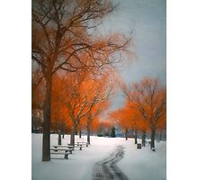 The Colours of Winter Photographic Print