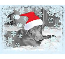 Leo Christmas 2008 Photographic Print