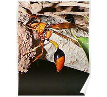 Hornet building a nest Poster