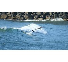 Dolphin Frolic Photographic Print
