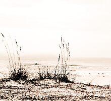 Solitude by Phillip M. Burrow