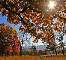 ~Shining Through~ by Terri~Lynn Bealle