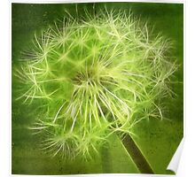 fractalius dandelion in green Poster