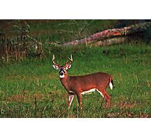 Buck at Dusk Photographic Print