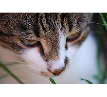 Kaizoe in the Cat Max Photographic Print