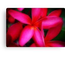 Hot Hot Pink Canvas Print