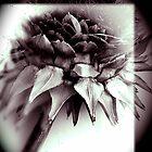 Artichoke flower  by chrissylong