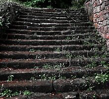 The Steps by Ryan Davison Crisp