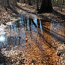 fall reflections  by Jeff Stroud