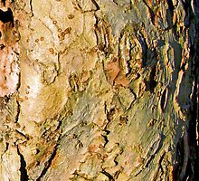 Old Apple Tree Bark by Iva Penner