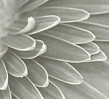 Gerbera Poems - The Quest of Realization by Prasad