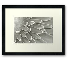 Gerbera Poems - The Quest of Realization Framed Print