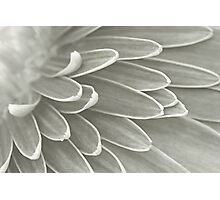 Gerbera Poems - The Quest of Realization Photographic Print