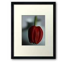 Simply red.....and white! Framed Print