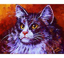 Longhair Cat Photographic Print