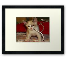 Baby wrestling with a shoe string Framed Print