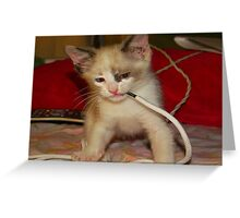 Baby wrestling with a shoe string Greeting Card