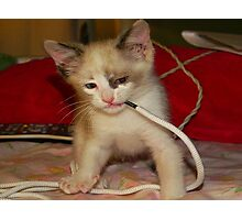 Baby wrestling with a shoe string Photographic Print