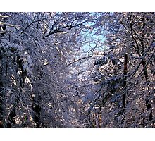 Winter white Photographic Print