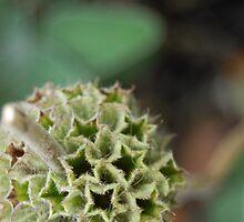 Buzzy Ball of Fluff by tasha555