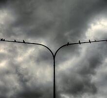 Birds on a ......Light Pole! by Jason Ruth