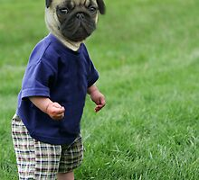 Baby Pug by AFormby